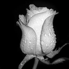 by Ad Spruijt - Black & White Flowers & Plants