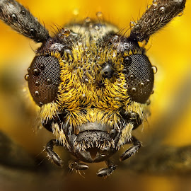 Big by Ondrej Pakan - Animals Insects & Spiders ( macro, dew, bug, dew drops, insect )