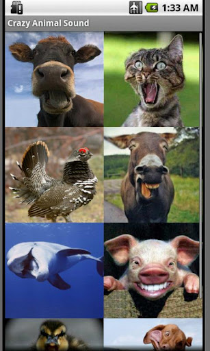 瘋狂的動物的聲音