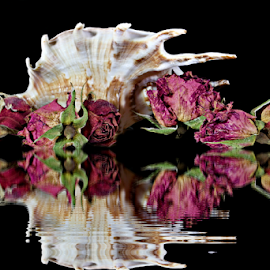 by Dipali S - Artistic Objects Still Life ( water, reflection, shells, dried, still life, artistic, flowers )