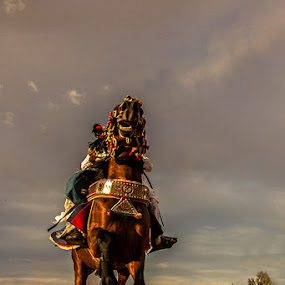 Knight From Libya by Hisham Elhuni - Animals Horses