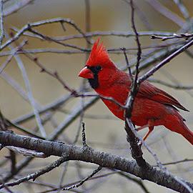 by Karen McKenzie McAdoo - Animals Birds