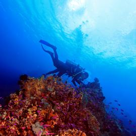 by Fentee  Affandy - Landscapes Underwater ( underwater, seascape, landscapes, diving )