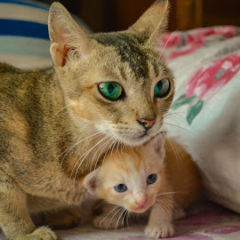mom with her kid by Tareq Touhid - Animals - Cats Portraits (  )
