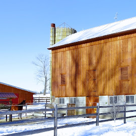 Old barn Restored by Sue Delia - Buildings & Architecture Other Exteriors ( old, barn, horse, pittstown, nj, restored,  )