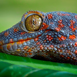 yellow eyes by Rhonny Dayusasono - Animals Reptiles