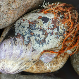 beach combing by Michelle Agnese - Instagram & Mobile Android ( mussel shell, granite )