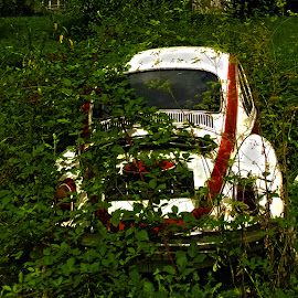 nature vs bug by Emina Dedić - Instagram & Mobile Other ( vw, old, old car, red, nature, white, bug, decay, volkswagen )