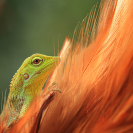 by Irwan Budiman - Animals Reptiles