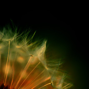 Sunny Day by Launa Bodde - Nature Up Close Flowers - 2011-2013
