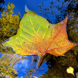 Leaf with iPhone by Tyrell Heaton - Instagram & Mobile iPhone ( leaf with iphone )