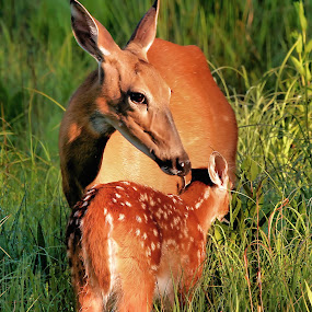 by Dave  Boyd - Animals Other Mammals