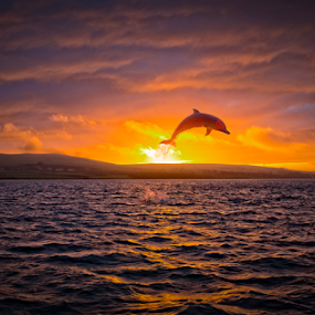 Ireland by Adrian O'Neill - Landscapes Sunsets & Sunrises ( dolphin, ireland, sunset, sea, sun,  )