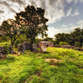 Vrbnik by Miro Cindrić - Landscapes Prairies, Meadows & Fields