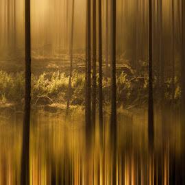 Kultainen fantasiametsä by Niina Hakkarainen - Digital Art Abstract