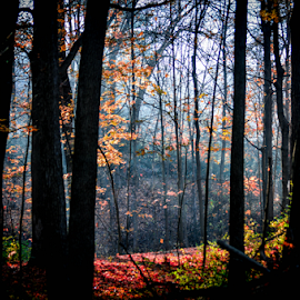 Morning Light by Sue Duq - Landscapes Forests