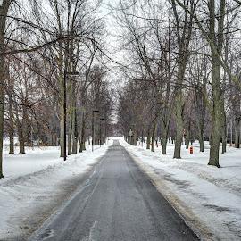Street with snow by Ito Masaki - City,  Street & Park  Street Scenes (  )