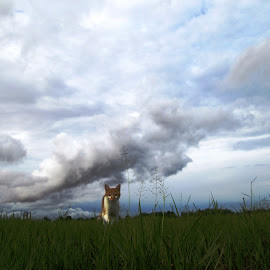 Cat in field by Hrodulf Steinkampf - Animals - Cats Playing ( clouds, field, cat, kitten, south africa, feline, landscape )