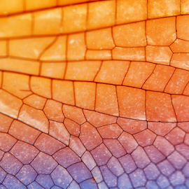 Wing of Dragonfly by Hafidz Wahyu - Abstract Macro ( abstract, wing, macro, colorful, macro photography, dragonfly, canon eos, close up )