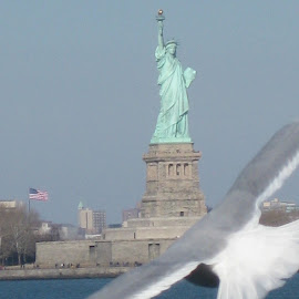Photo Bombing the Statue of Liberty by Katie Matheson - Buildings & Architecture Statues & Monuments ( #seagull, #nyc, #newyorkcity, #statueofliberty, #photobomb, #newyorkharbor )