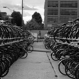 Bikes by Duncan Riggall - City,  Street & Park  Neighborhoods