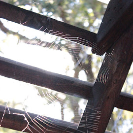 web by Bryn Beynon - Nature Up Close Webs ( wood, spiderwed, focus, spider, web, light )