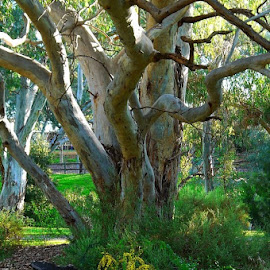 Little Big by Leigh Martin - Nature Up Close Trees & Bushes ( bush tree gum accacia )