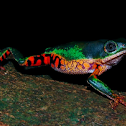 Orange-legged leaf frog