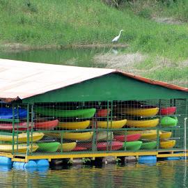 Colorful Kayaks by Sherri Hillman - Transportation Boats ( color, kayaks, costa rica, lake arenal, egret )