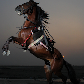 wild by Ahmed Bhutta - Animals Horses