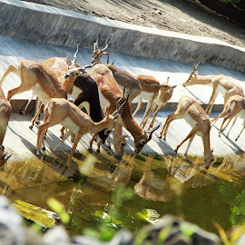 by Jagdeep Kaur - Animals Other