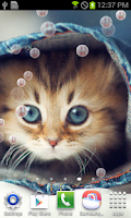 Screenshot of Kitty Cat Live Wallpaper