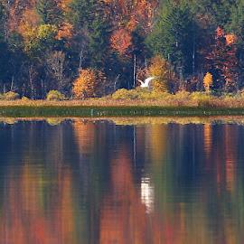 Autumn Lake by Don Thurheimer - Landscapes Travel ( fall colors, autumn, lake cranberry, fall, landscape, color, colorful, nature )