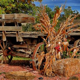 Fall Wagon by Terry Ricks - Transportation Other ( fall colors, fall, wagon, buckboard, halloween )