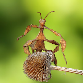 Hello by Ondrej Pakan - Animals Insects & Spiders ( macro, bugs, macro photography, bug, insect )