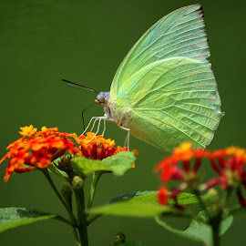 Butterflies can't see their wings.They cant see how truly beautiful they are,but everyone else can. People are like that as well.  by Nagarjune Kesavan - Novices Only Wildlife