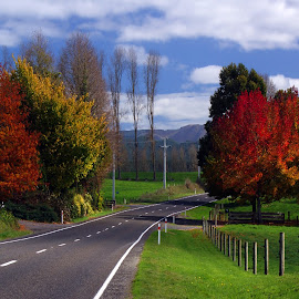 Autumn travel by Dragan Keca - Landscapes Travel ( autumn, trees, road, leaves, new zealand,  )
