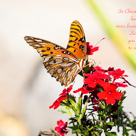 by Sandra Clukey - Typography Captioned Photos ( butterfly, butterflies, cleveland tennessee photographer, chattanooga tennessee photographer )
