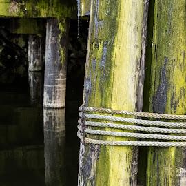 Supporting Granville Island by Stephen Bridger - Artistic Objects Other Objects ( granville island, green, posts, sea, docks, algae, moorings, dock, rope, sailing, granville, dock posts, wooden posts, nautical )