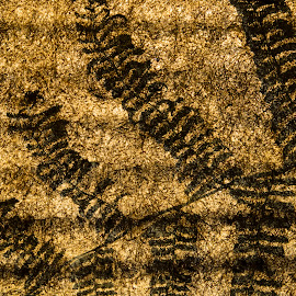 Pine Canvas by Ben Pagtulingan - Abstract Patterns ( roof, fern, pattern, sagada, pine needle )