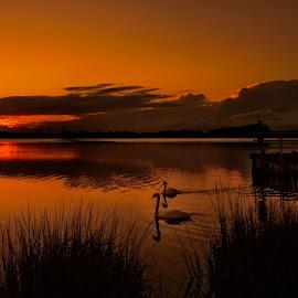 In For the Night by Linda Karlin - Landscapes Sunsets & Sunrises ( sunset, landscape )
