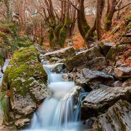 by Xristos Giofkos - Landscapes Forests