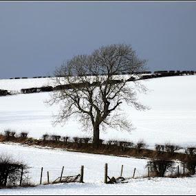 Winter 3 by Craig Skinner - Uncategorized All Uncategorized (  )