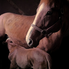 Loula and Max by Deanna Ramsay - Instagram & Mobile iPhone ( horse, broodmare, baby animals, foal, animal )