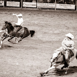 Team Roping by Melissa Sweet-Leavins - Sports & Fitness Rodeo/Bull Riding ( teamwork, texas, horse, rodeo, bull,  )