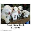 Gambar preview Beberapa Hewan Dengan Harga Yang Termahal Di Dunia