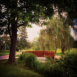 Ahhh so pretty and I love weeping willows. by Julie Dabour - Landscapes Prairies, Meadows & Fields ( trees, parks, allentownpa, cedarbeachrosegarden, landscapes, nature, beautiful, beautifulday, summer, peace )
