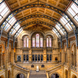 London National History Museum by Laurentiu Laur - Buildings & Architecture Public & Historical ( london, history museum, london national history museum )