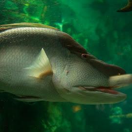 nice profile by Helen Bagley - Animals Fish ( aquatic, nature, fish, aquarium, swimming )