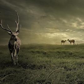 triangle love by Budi Cc-line - Digital Art Animals ( grassland, grasses, love, landscapes, deer )